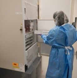Mouse and Human Cell Culture